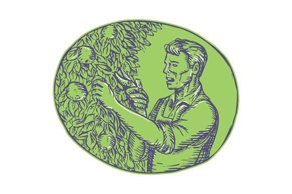 Orchardist Trimming Plum Tree Oval E