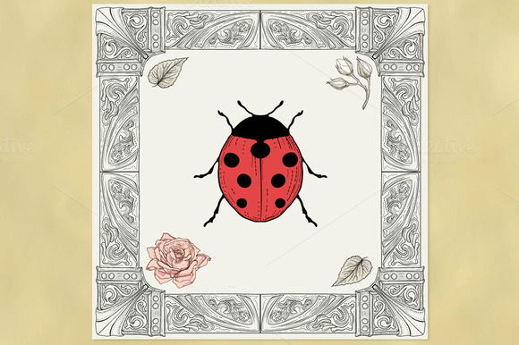 Ladybird And Ornate Frame
