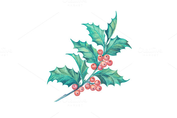 Christmas Mistletoe Branch Isolated
