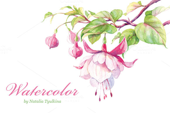 Watercolor Fuchsia Flower