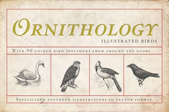 Ornithology Bird Illustrations