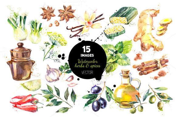 Watercolor Herb Spices Vector Set