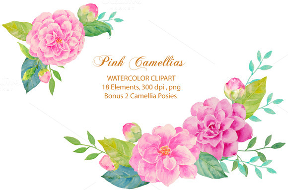 Wedding Pink Camellia Clipart