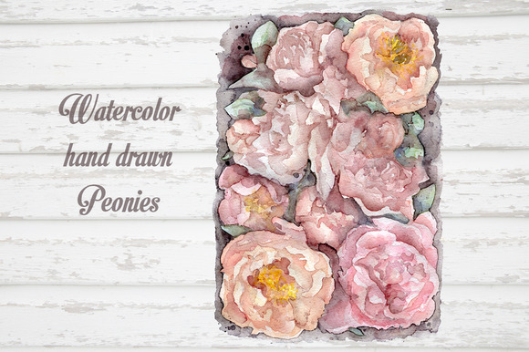 Watercolor Peonies Hand Drawn