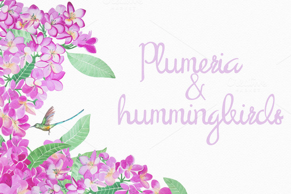 Watercolor Plumeria And Hummingbirds