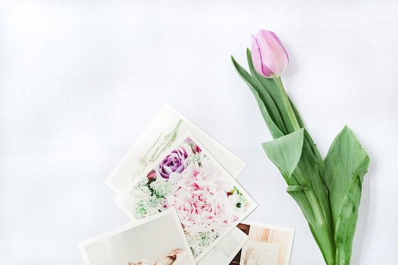 Styled Stock Photo Tulip Photos