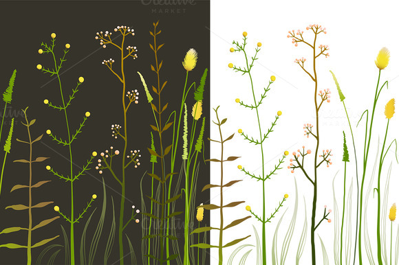 Wild Field Flowers And Grass