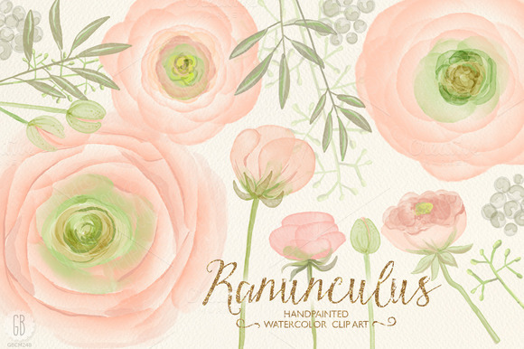 Watercolor Ranunculus Blush Pink