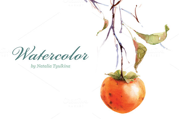 Watercolor Persimmon