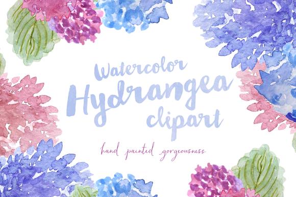 Watercolor Hydrangea Clipart