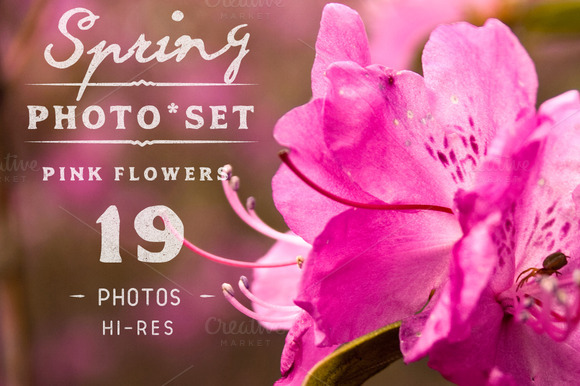 Spring Flowers Photo Set