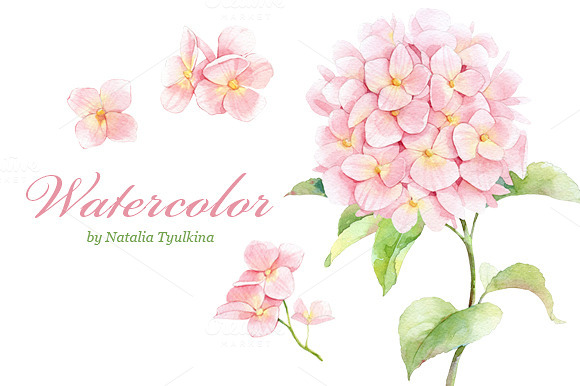 Watercolor Pink Hydrangea