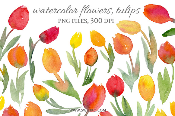 Watercolor Flowers Tulips
