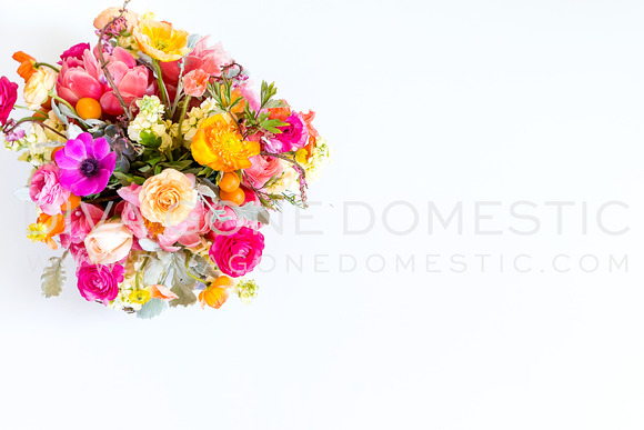 Styled Stock Photo Colorful Flower