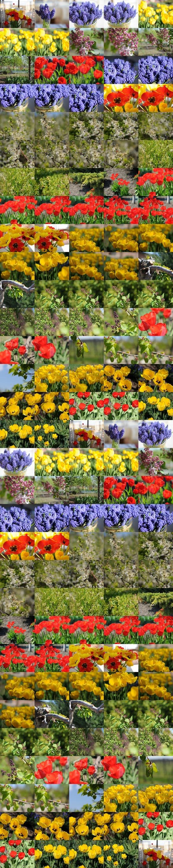 77 Photo Bundle Spring Flowers