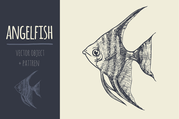 Sketch Angelfish