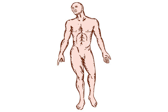 Gross Anatomy Male Standing Woodcut