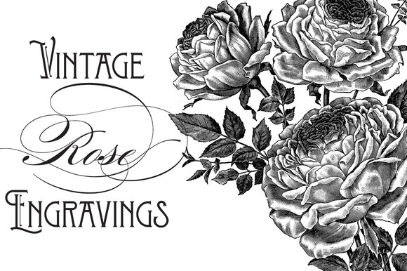 Vintage Rose Engravings