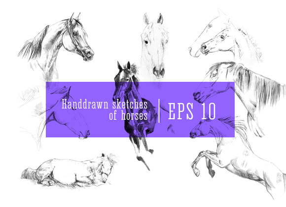Horses Sketches EPS 10