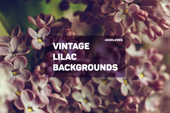 Vintage Lilac Backgrounds