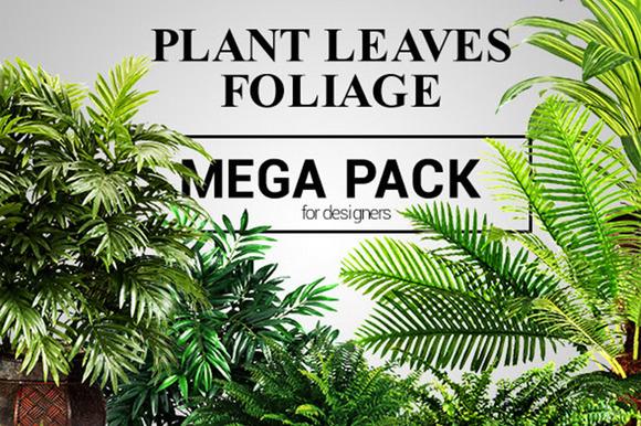 Plant Leaves Foliage Mega Pack