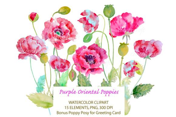 Watercolor Purple Oriental Poppy