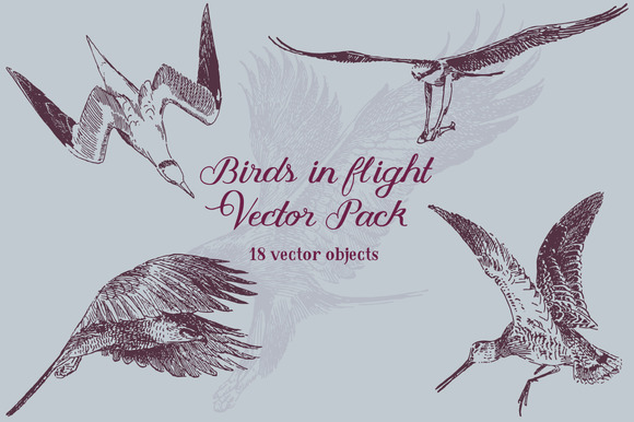 Birds In Flight Vector Pack