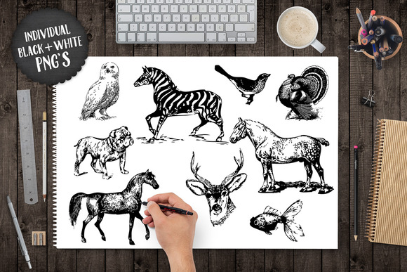 Vintage Animal Illustration Graphics