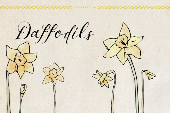 Watercolor Daffodils