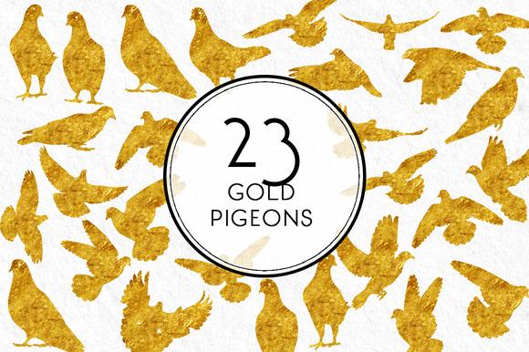Gold Pigeon