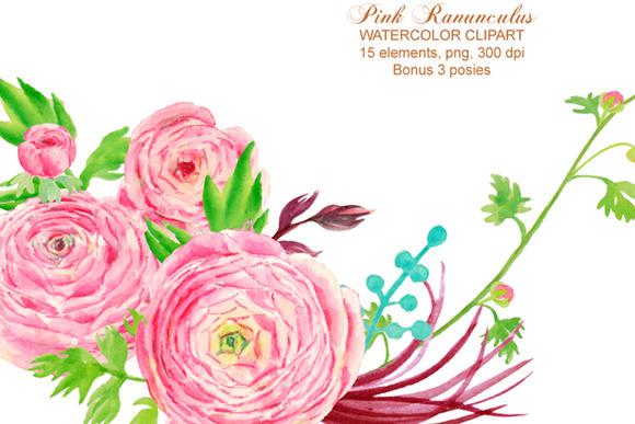 Watercolor Clipart Pink Ranunculus