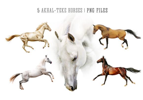 5 PNG Akhal-teke Horses