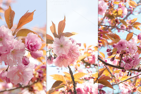 Sakura Flowers Spring Set