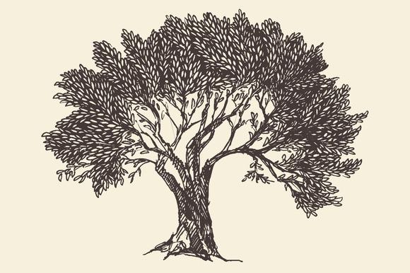 Set Of Olive Trees