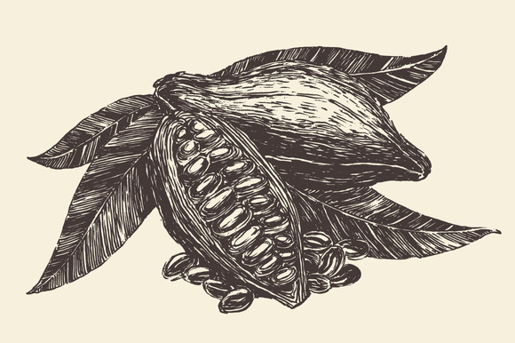 Cacao Branch Illustration