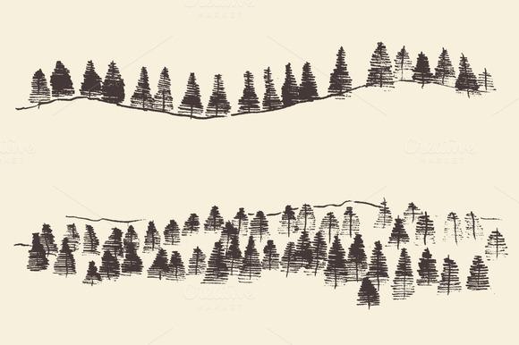 Fir Forest Illustration