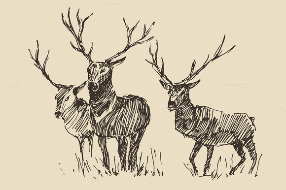Illustration Of Deers