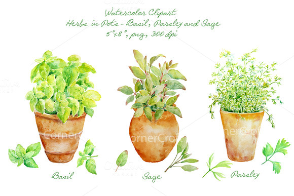 Watercolor Clipart Herbs In Pot