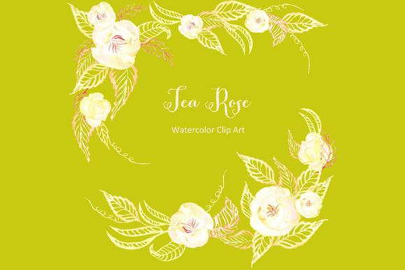 Tea Roses Set Watercolor Cip Art