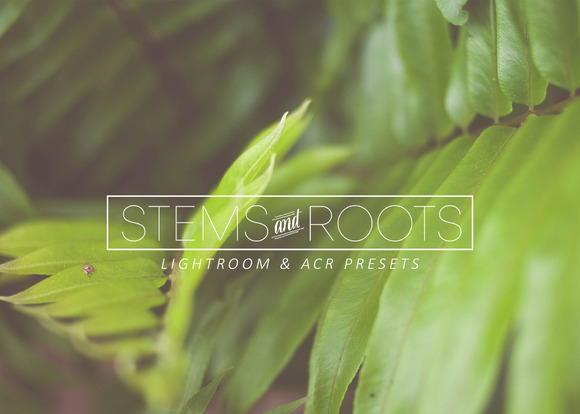 Stems Roots LR ACR Presets
