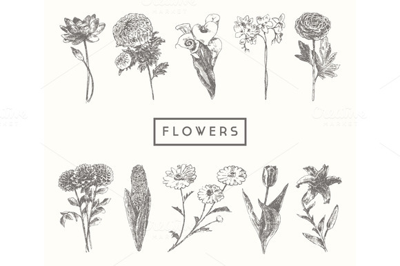 Trendy Collection Of Flowers