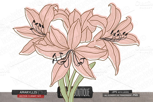 Amaryllis Flower Vector Clip Art