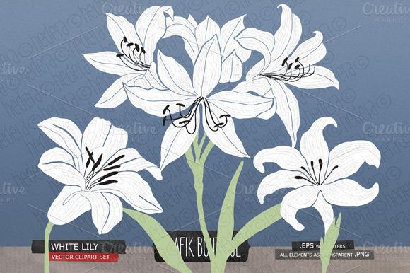 White Lily Gladiolus Amaryllis