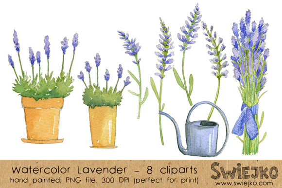 Watercolor ClipArt Lavender
