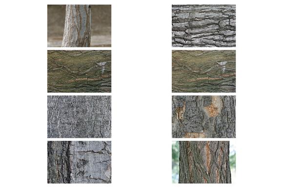 8 Tree Bark Textures