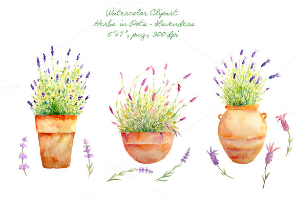 Watercolor Clipart Lavenders Herb