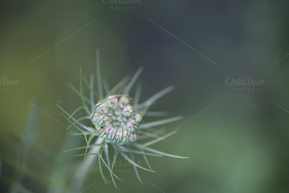 Wild Flower Soft Background