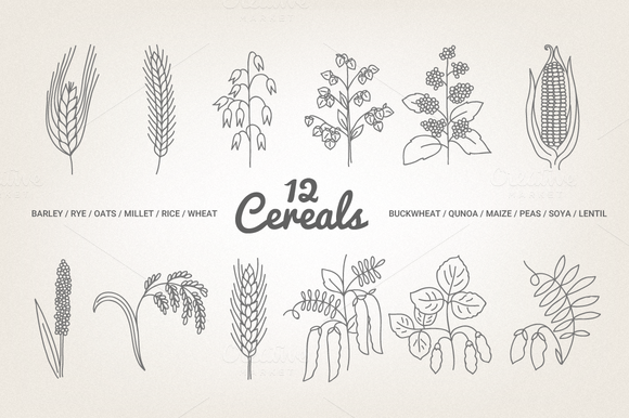 12 Cereals Illustration Patterns