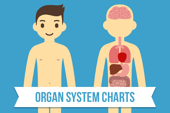 Human Anatomy Charts