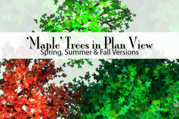 36 Maple Trees In Plan View